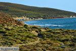 Bij Gomati en woestijn Amothines Katalakos Limnos (Lemnos) foto 13 - Foto van De Griekse Gids