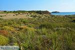 Bij Gomati en woestijn Amothines Katalakos Limnos (Lemnos) foto 15 - Foto van De Griekse Gids