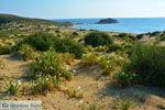 Bij Gomati en woestijn Amothines Katalakos Limnos (Lemnos) foto 20 - Foto van De Griekse Gids