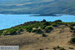 Bij Gomati en woestijn Amothines Katalakos Limnos (Lemnos) foto 30 - Foto van De Griekse Gids