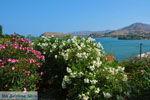 Myrina Limnos (Lemnos) | Griekenland foto 46 - Foto van De Griekse Gids