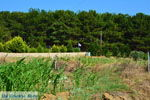 GriechenlandWeb.de Nea Koutali Limnos (Lemnos) | Griechenland foto 1 - Foto GriechenlandWeb.de