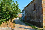 GriechenlandWeb.de Pedino Nea Koutali Limnos (Lemnos) | Foto 3 - Foto GriechenlandWeb.de