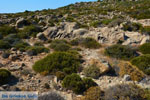 Chivadolimni Milos | Cycladen Griekenland | Foto 15 - Foto van De Griekse Gids