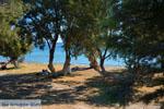 GriechenlandWeb.de Papikinou-strand Adamas Milos | Kykladen Griechenland | Foto 17 - Foto GriechenlandWeb.de