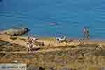 Agios Sostis Mykonos - Cycladen -  Foto 16 - Foto van De Griekse Gids
