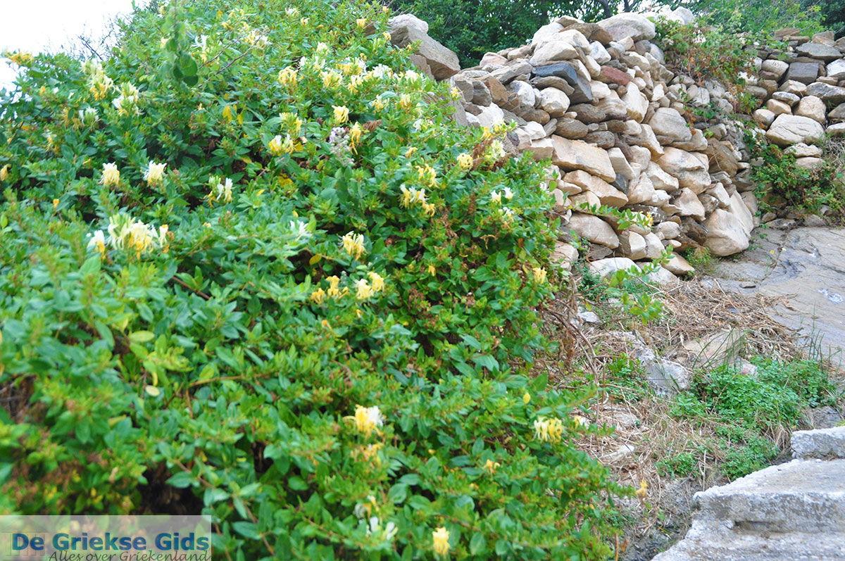foto Apollonas Naxos - Cycladen Griekenland- nr 49