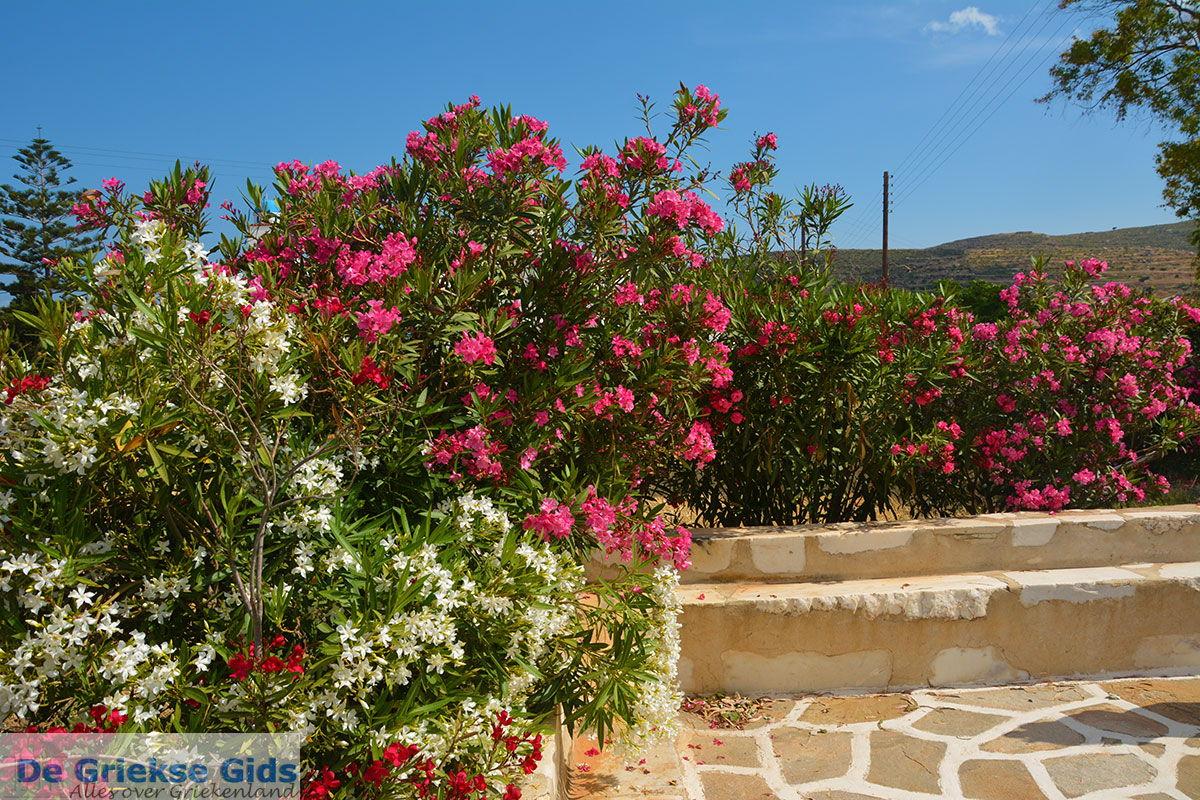 foto Engares Naxos - Cycladen Griekenland- nr 17