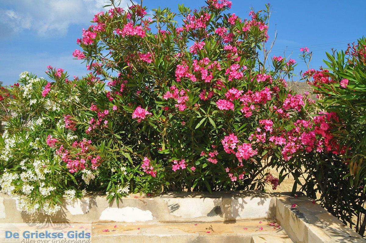foto Engares Naxos - Cycladen Griekenland- nr 30