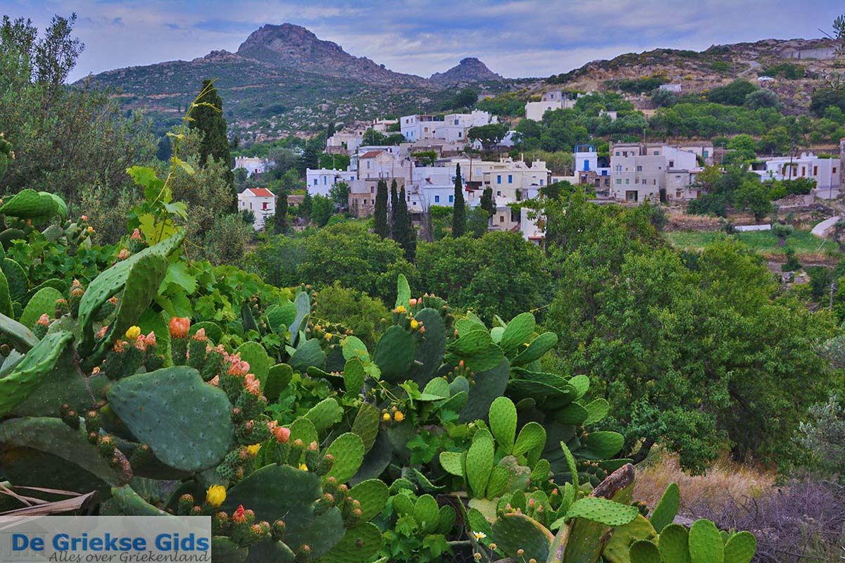 foto Potamia Naxos - Cycladen Griekenland - nr 65