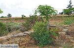Ano Sangri Naxos - Kykladen Griechenland- nr 13 - Foto GriechenlandWeb.de