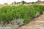 GriechenlandWeb.de Ano Sangri Naxos - Kykladen Griechenland- nr 30 - Foto GriechenlandWeb.de