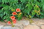 Ano Sangri Naxos - Cycladen Griekenland- nr 31