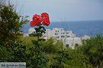 Apollonas Naxos - Cycladen Griekenland- nr 27 - Foto van De Griekse Gids