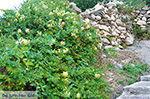 GriechenlandWeb.de Apollonas Naxos - Kykladen Griechenland- nr 49 - Foto GriechenlandWeb.de