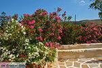 GriechenlandWeb.de Engares Naxos - Kykladen Griechenland- nr 17 - Foto GriechenlandWeb.de