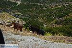 Kalantos Naxos - Cycladen Griekenland- nr 3 - Foto van De Griekse Gids