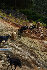 GriechenlandWeb Kalantos Naxos - Kykladen Griechenland- nr 5 - Foto GriechenlandWeb.de