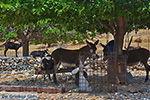 Kalantos Naxos - Cycladen Griekenland- nr 14 - Foto van De Griekse Gids