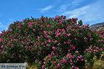 Kalantos Naxos - Cycladen Griekenland- nr 15 - Foto van De Griekse Gids