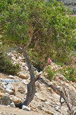 Kalantos Naxos - Cycladen Griekenland- nr 52 - Foto van De Griekse Gids