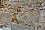 Kato Sangri Naxos - Cycladen Griekenland- nr 15 - Foto van De Griekse Gids