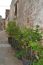 Kato Sangri Naxos - Cycladen Griekenland- nr 32 - Foto van De Griekse Gids