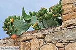 Kato Sangri Naxos - Cycladen Griekenland- nr 51