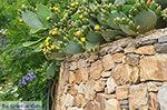 Kato Sangri Naxos - Cycladen Griekenland- nr 52 - Foto van De Griekse Gids