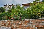 Potamia Naxos - Cycladen Griekenland - nr 9