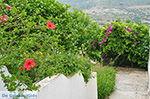 Potamia Naxos - Cycladen Griekenland - nr 34