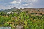Potamia Naxos - Cycladen Griekenland - nr 57 - Foto van De Griekse Gids