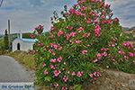 Potamia Naxos - Cycladen Griekenland - nr 60