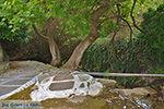 Potamia Naxos - Cycladen Griekenland - nr 82 - Foto van De Griekse Gids