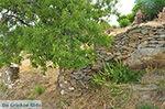 Potamia Naxos - Cycladen Griekenland - nr 111 - Foto van De Griekse Gids