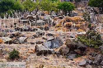Vulkaan Nisyros - Dodecanese foto 4 - Foto van https://www.grieksegids.nl/fotos/nisyros/350pix/nisyros-vulkaan-004.jpg