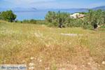 Koilada (Kilada) | Argolis Peloponessos | Griekenland foto 23 - Foto van De Griekse Gids