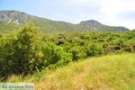 Bij oud Epidavros | Argolis Peloponessos | Griekenland foto 4 - Foto van De Griekse Gids