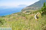 Bij oud Epidavros | Argolis Peloponessos | Griekenland foto 9 - Foto van De Griekse Gids