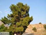 Mycene Argolis foto 24 - Foto van De Griekse Gids