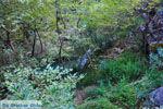 GriechenlandWeb.de Watervallen Polilimnio | Messinia Peloponessos | Foto 3 - Foto GriechenlandWeb.de