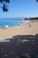 GriechenlandWeb.de Kyparissia | Messinia Peloponessos | Foto 10 - Foto GriechenlandWeb.de
