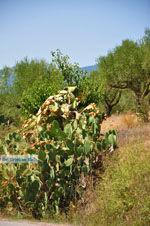 Meligalas | Messinia Peloponessos | Foto 2 - Foto van De Griekse Gids