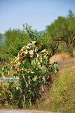 Meligalas | Messinia Peloponessos | Foto 3 - Foto GriechenlandWeb.de