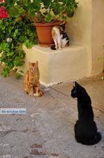 GriechenlandWeb.de Mystras (Mistras) | Lakonia Peloponessos | GriechenlandWeb.de 33 - Foto GriechenlandWeb.de