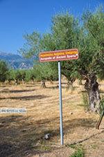 Oud-Sparta (Archaia Sparti) | Lakonia Peloponessos | 7 - Foto van De Griekse Gids