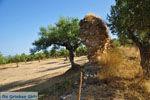 Oud-Sparta (Archaia Sparti) | Lakonia Peloponessos | 12 - Foto van De Griekse Gids