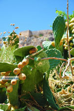Monemvasia (Monemvassia) | Lakonia Peloponessos | GriechenlandWeb.de 37 - Foto GriechenlandWeb.de