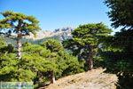 Bergdorpen Ziria | Korinthia Peloponessos | De Griekse Gids 11 - Foto van De Griekse Gids