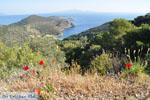 Poros | Saronische eilanden | De Griekse Gids Foto 209 - Foto van De Griekse Gids